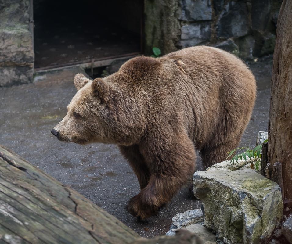 Ours (Zoo de Prague)