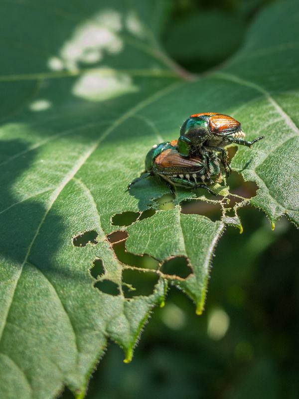 insecte au jardin