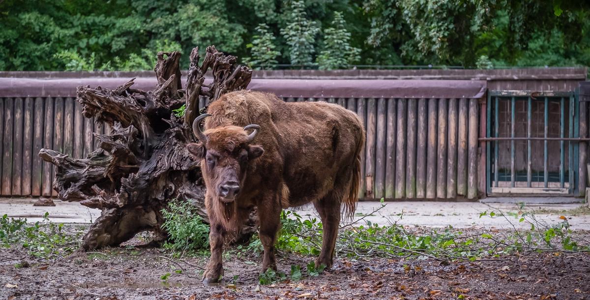 Zoo de Prague (2016)