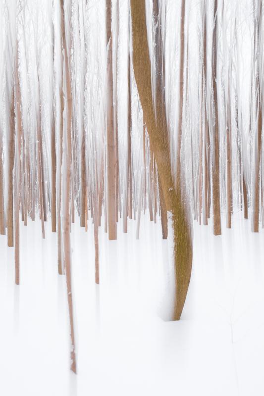 photos avec effets - forêt