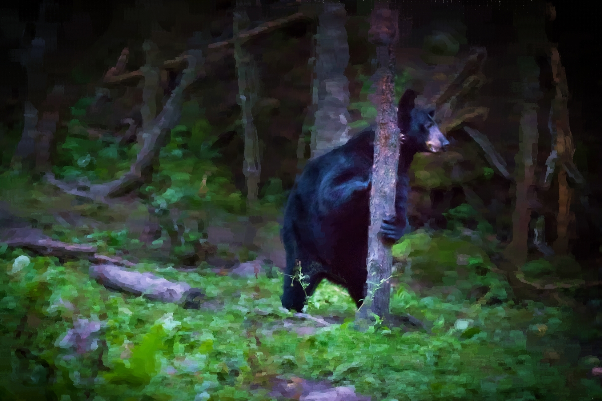 Des ours… en vrai!
